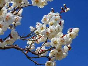 日本一の大富豪が説く「楽しく笑って生きる」ための7つの法則