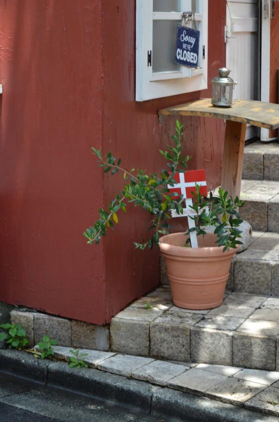 Cafe Daisy  乃木坂にひっそり佇むテラスが最高のデンマーク料理屋さん