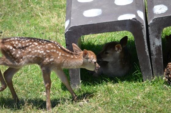 奈良公園〜春日大社 — 鹿がたくさんいて可愛かったので写真をいっぱい撮った