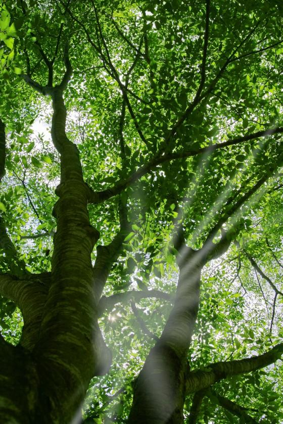 tree_woods_beiz.jp_M09180