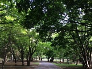 札幌 すすきの ⇔ 円山公園 往復10kmラン! [2014年6月 札幌・小樽旅行記 その14]