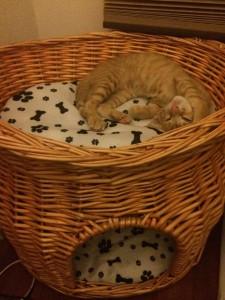 我が家に仔猫がやってきて最初の一日が過ぎて思うこと