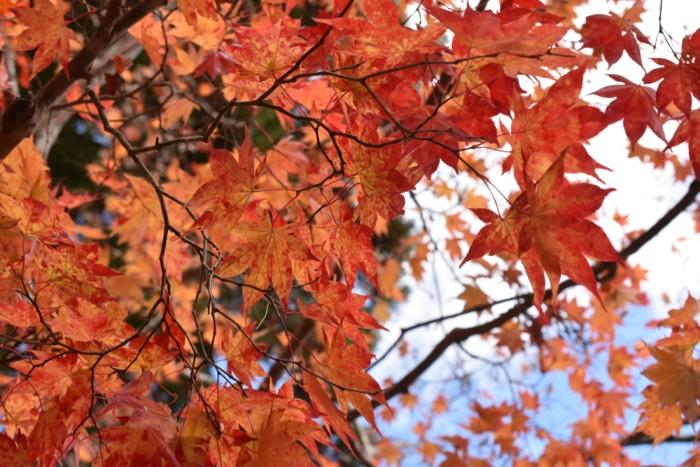 山が燃える深き秋  早朝から夜まで高野山を満喫しました! [2015年晩秋の旅 旅行記 その3]