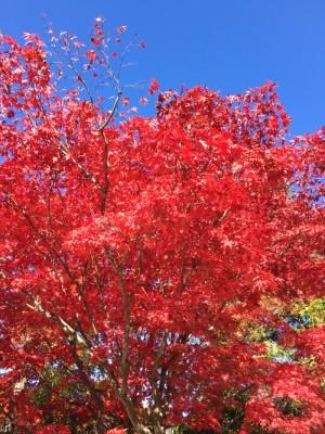 高野山から4時間かけて京都へ移動!南禅寺の迫力に感動し、夜は匠のフレンチを楽しむ! [2015年晩秋の旅 旅行記 その5]