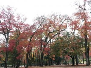 鹿と東大寺と紅葉と!奈良公園早朝6kmラン!! [2015年晩秋の旅 旅行記 その11]