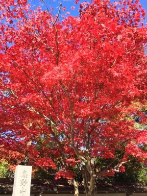 さらば高野山 最後に最高の紅葉が見送ってくれた!! そして旅は京都へと続く!! [2015年晩秋旅行記 その32]