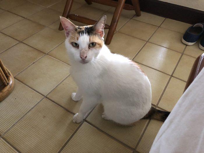 パラオ3日目の朝は のら猫ミケちゃんの訪問で始まった! すごく人懐こくて可愛い!! [2017年パラオ旅行記 その20]
