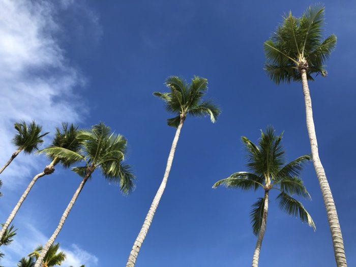 パラオ3日目の午後もひたすらプライベートビーチで読書とシュノーケリング三昧!どんどん天気が良くなりどんどん真っ黒に日焼けしていく!! [2017年パラオ旅行記 その23]