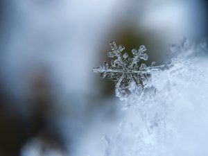「冬が好き」と「冬が得意」は違う [体]