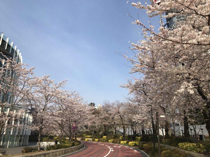 noteの有料記事 新作更新 「春が苦手」という残存記憶